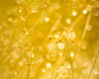 Golden Yellow Dew drops sparkle in sunlight