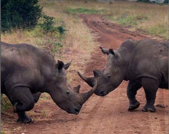 Rhino, Rhinoceros Fine Art Photography, Nature, Africia, Home Decor, 10X10, Travel Photography Print