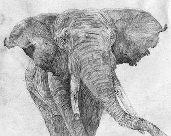 Black & White Elephant Zoo Drawing Print 5x7 or A4