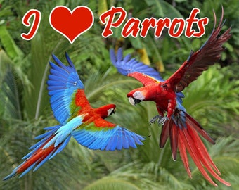 I Love Parrots Fridge Magnet 7cm by 4.5cm, Teacup Pigs