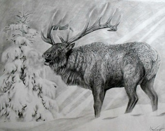 Bugling Elk in Pencil Print