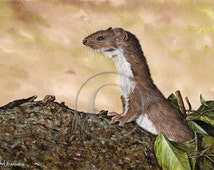 Weasel Giclee Print in Watercolor, Cute Rodent, Stoat Ferret Family , A4 in paper size, Watercolour Detailed Painting