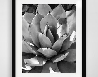 Cactus Photography, Desert Wall Art, California Art, Printable Wall Art, Wall Prints, Desert Art, Black and White Photography, Monochrome