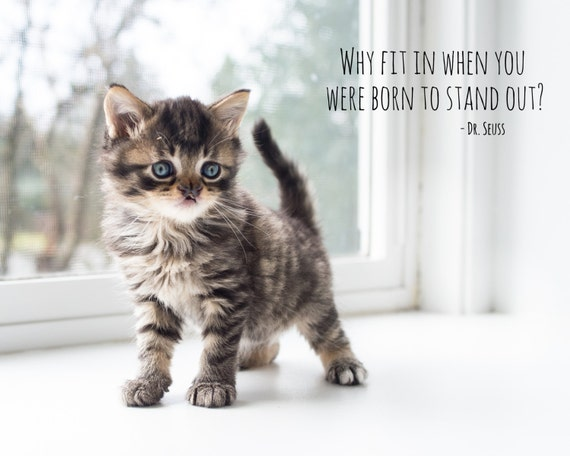 Photograph of rescue kitten Marvel, born to stand out!