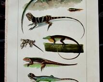 Lizards Zoological Chromolithograph - 1905 International Encyclopaedia with Bonus Monochrome Lizard Print