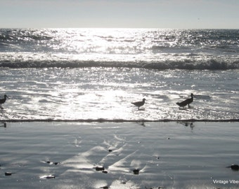 Birds at the Beach Phoography Instant Download, Nature Art
