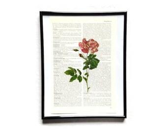 Rose 1 vintage art print encyclopedia old book pages image poster