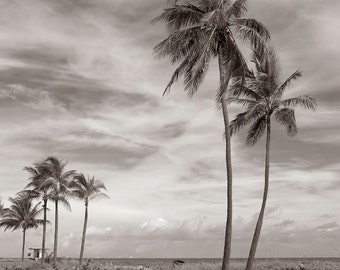Beach Palms Black and White Photography Beach vegetation Hollywood, FLORIDA