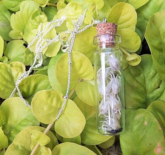 Bottled Chive Seeds Necklace