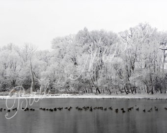 Winter scene, winter landscape, winter photography, frozen winter, landscape photography, ice, ducks, snowflake, wall art, digital art,trees