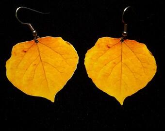 Brown Aspen Leaf Earrings 2