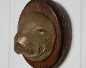 Golden Manatee! Small Mounted Animal Head