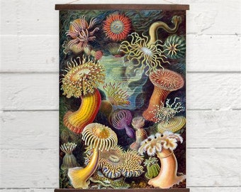 Ernst  Haeckel Sea Anemones Canvas Poster Print Wooden Wall Chart Size A3 16x11