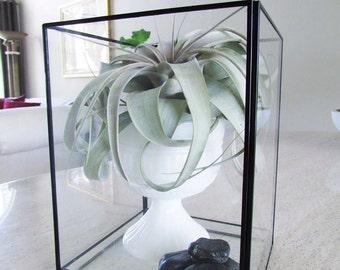 Media : Vase in Glass