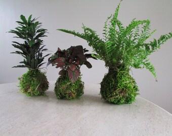 Kokedama Set of Three