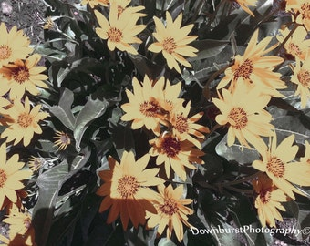Yellow Vintage Flowers, Nature Photography, Yellow, Flower Photography, Vintage Photography, Photography, Nature, Washed Out Photo