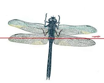 Dragonfly - Temporary tattoo