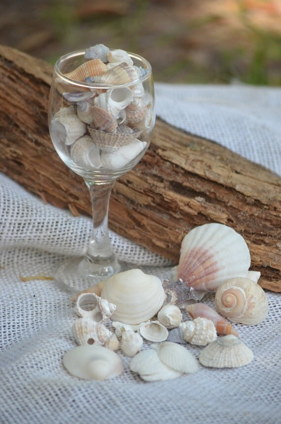 Seashell variety, small seashells (10 oz. approx. 50 to 60 shells), shell collection, beach crafts and decor, coastal decor
