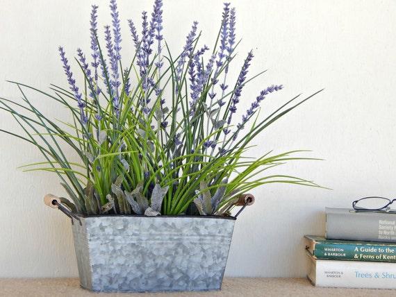 Kết quả hình ảnh cho plant lavender in a large flower pot
