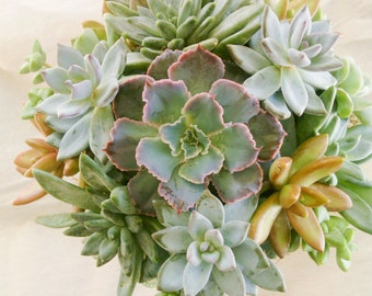 Living Succulent Wedding Bouquet - live eco-friendly bridal flowers that can be planted