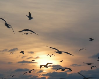 TAKE FLIGHT--Beach Photography, Seagulls in Flight, Sunset, Lake Michigan, Seascape, Silhouette, Picture of Seagulls, Gift Ideas, Nautical
