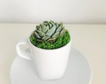 Mini TeaCup Terrarium