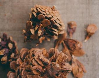Fine Art Photo, Crushed Pinecones, Nature Art, Autumn, Winter, Cabin Art, Earthy, Rustic Art, Pinecone Photo, Woodland Decor, Small Art