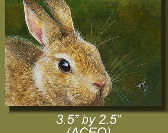 Brown Bunny Rabbit Art by Melody Lea Lamb ACEO Print