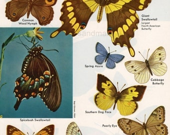 Vintage Butterflies of Many Regions Double Sided Chart