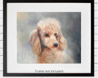 Print of Apricot Poodle Original Art - 8 by 10