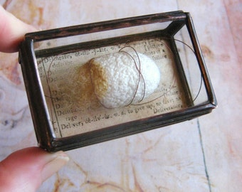 Miniature Museum - Larger Glass Box Assemblage Curiosity Art Object