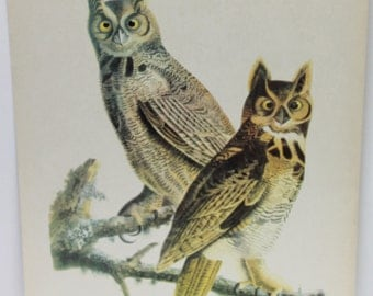 Antique great horned owl image, great horned owl image, antique bird image,bird image,great horned owl,homr decor,man cave,man gift,
