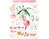 Kitchen art, Peach pie recipe print, Watercolor kitchen illustration,  8X10 poster, Food artwork, Fruit art, Kitchen wall art, Kitchen decor
