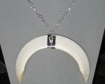 Wart Hog Tusk Necklace, Sterling Silver Chain, Wild Boar Teeth, Wild Pig Tooth