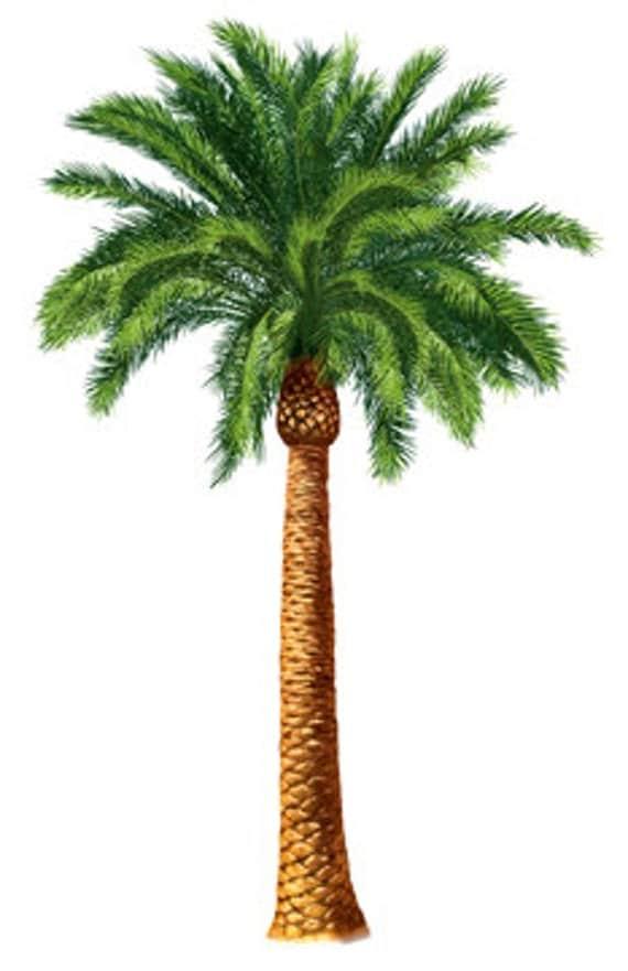 Desert Palm Tree Botanical Island Tropical Tommy Bahama Style