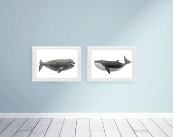 Large Whale Set Nautical Vintage Style Art Print Black and White Grey Beach House Decor Nursery Humpback