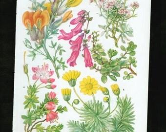 Vintage Botanical Print Antique FLOWERS, plant print botanical print, bookplate 69 art print, pink yellow plants plant wall