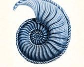 Coastal Decor- Giclee Canvas Print, Indigo Blue Nautilus Shell Series No. 1, Ernst Haeckel, Giclee Art Print, Nautical Art, Beach Decor