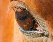 Chestnut Horse Photography, equine art, horse eye photo, rustic western decor, fine art print