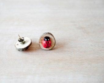 Ladybug earrings mounted on wooden disk