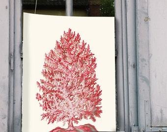 Coral Tree, Red, Art Print Nautical print sea beach house decor wall decor marine painting nautical picture nautical decor, coral print
