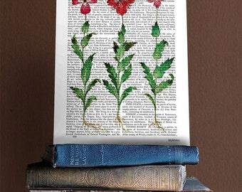 Italian Carnation 1 - Carnation print, carnation picture, floral print floral artwork flower print flower art flower picture floral picture