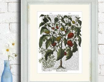Kitchen Decor, Peppers Print 2 - kitchen poster kitchen print Kitchen art dining room decor food illustration gift for hostess gift cook