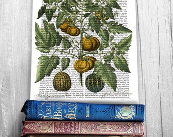 Vegetable Print, Peppers Print 5 - Kitchen Wall Decor kitchen decor kitchen print Kitchen art dining room decor food illustration gift cook