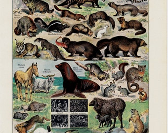 1940s Vintage animal print.  A sweet zoo, wild animals