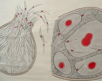 French Vintage Wall chart / Panneau scolaire Parasite du paludisme-Malaria parasite- ZOOLOGY-