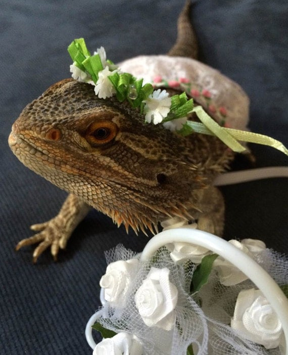 flower girl costume for bearded dragons one size fits most