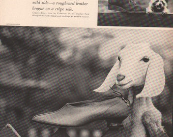 Original Vogue print, 1940s photo display with nubian goat and raccoon - AN 039