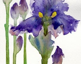 Bearded Iris- Print