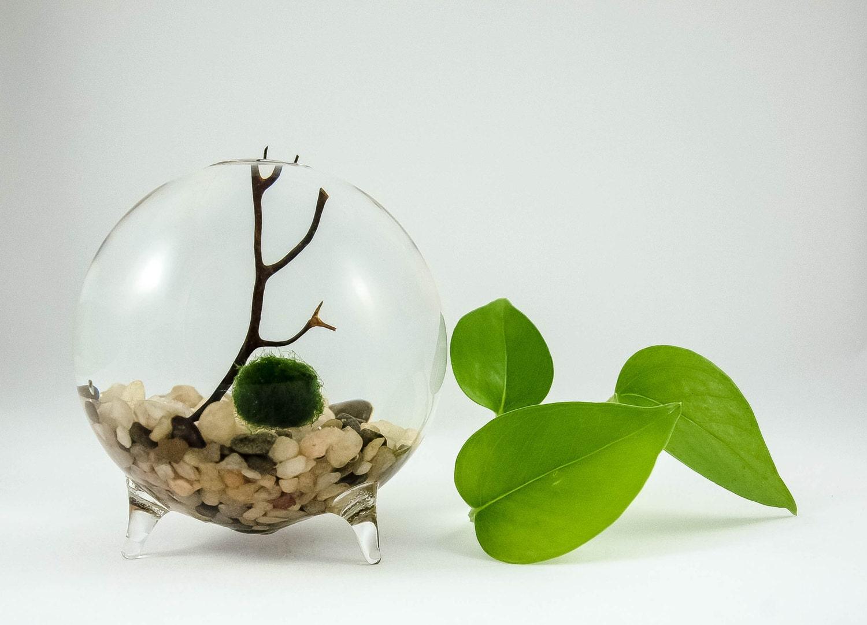 Marimo live globe terrarium round vase terrarium underwater for Vase aquarium rond